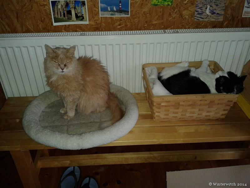 Skrollan und Pitou an der Heizung