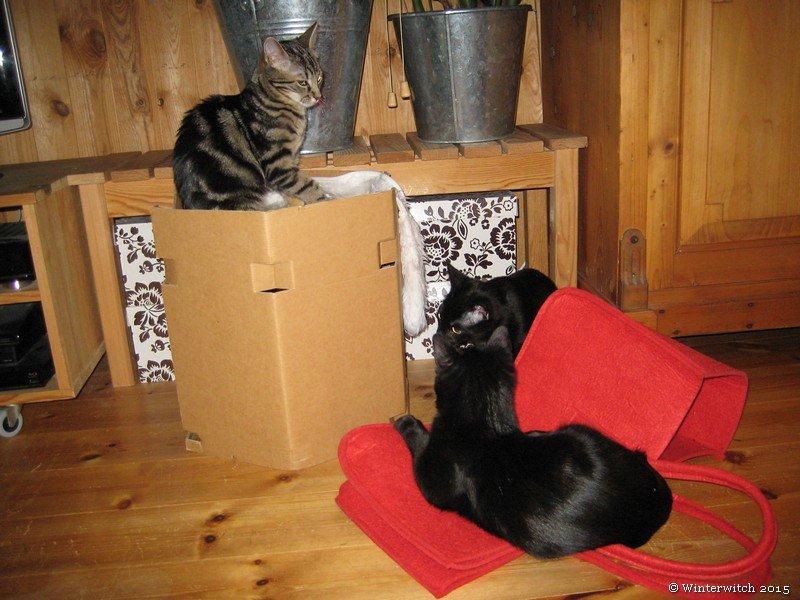 Drei Katzen mi roter Filztasche