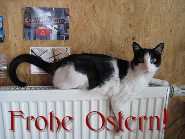 Ostergruss mit Katze